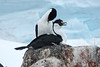 Antarctica-00713