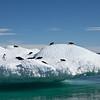 Adellies Penguins play, Devil island, Antarctica