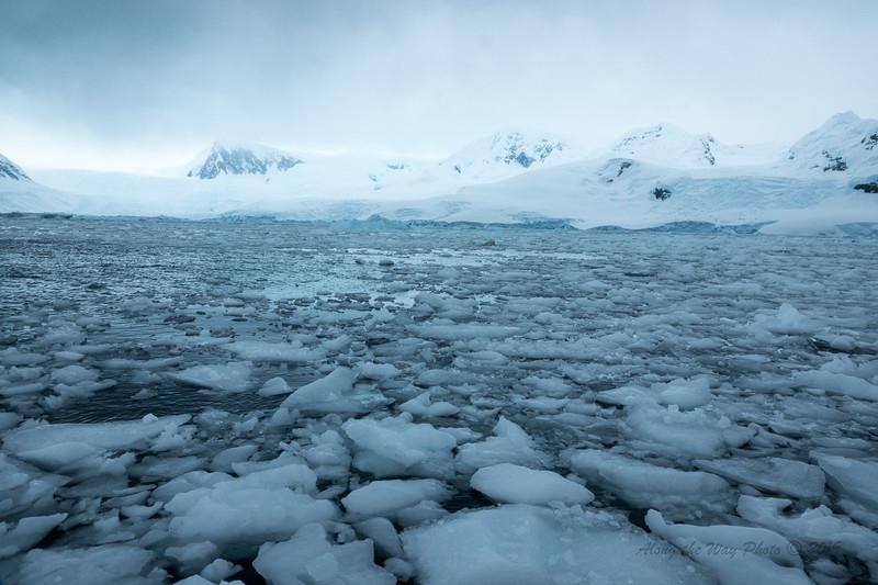 Antarctica-09832