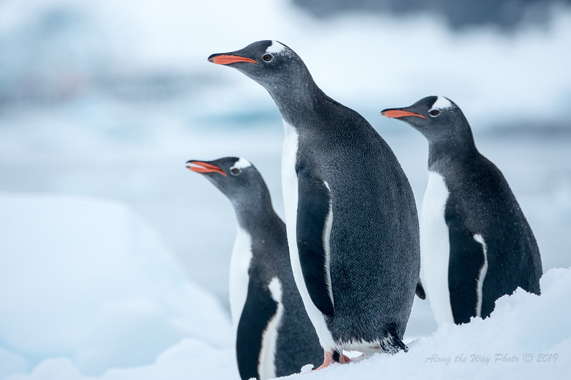 Antarctica-00161