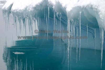 pleneua ice 3_1