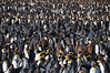 About 450,000 pairs of King penguins inhabit South Georgia
