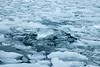 Antarctica-09830