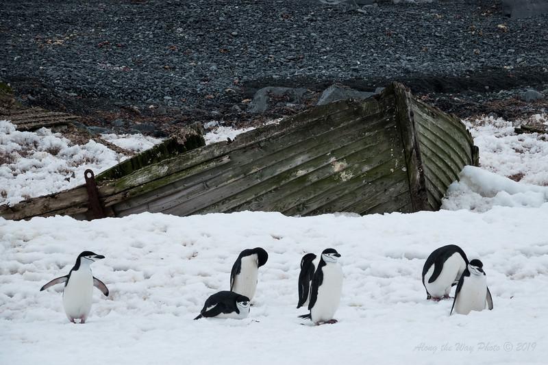 Antartica-9152