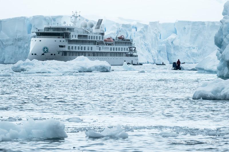 Antartica-09999