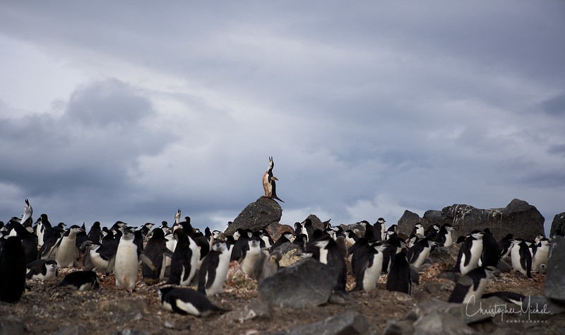 The small 1.4 x 1.7 km Penguin Island is located off the SE coast of King George Island in Antarctica's Shetland Islands, west of the axis of the Bransfield Rift. 