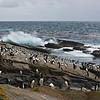 New Island, Falklands