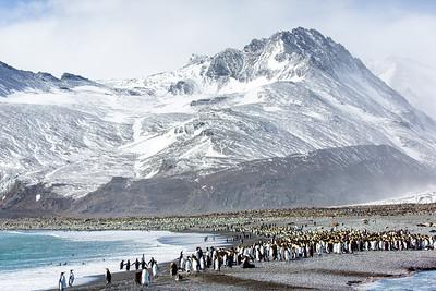 King penguin colony, St Andrews Bay, South Georgia