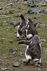 Antarctica's Austral Summer 2009 :