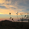 Antelope Island, Utah-Sunflower sunset August 21, 2016