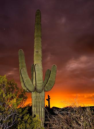 cactus saguaro sunset CvCk 7491
