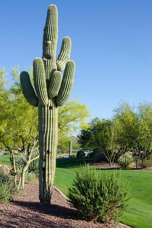 Cactus Anthum Park 5202