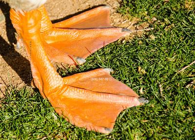 Goose web feet 5125