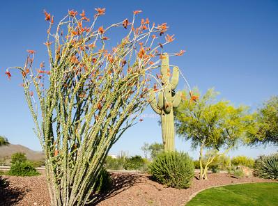 plant & cactus 5193