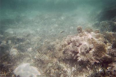 Stingray City Coral Reef