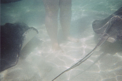Stingrays At Her Feet