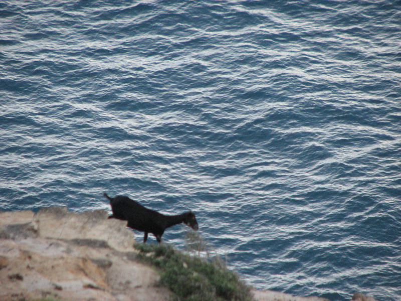 Water goat!  Actually, I took this with a telephoto.  It is a lot higher.