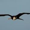 Bird flying above ship in Antigua on 11/21/06