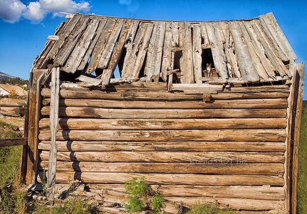 abandoned house cat 6259 hd3 2x