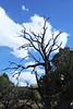 tree silhouette clouds dark sky 4770cf