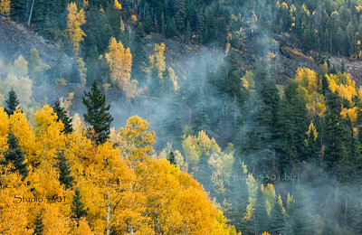 trees changing color_ fog_mist_ CO_7625cf