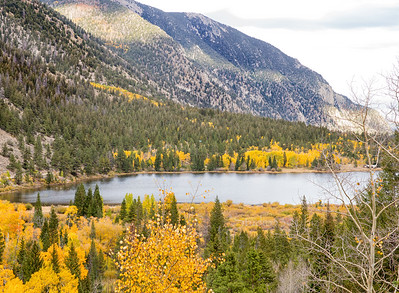 pine lake yellow trees 6971 PatL