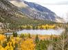pine lake yellow trees 6971 PatL