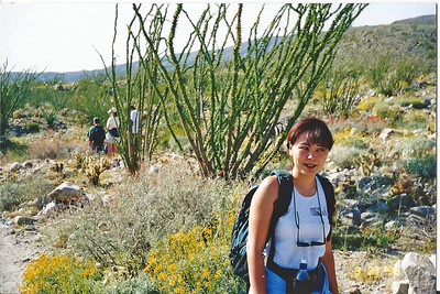 3/21/98 Yaqui Well Nature Trail. Anza Borrego Desert State Park, San Diego County, CA