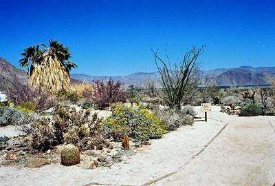 3/7/04 Visitor Center. Anza Borrego Desert State Park, E. San Diego County, CA
