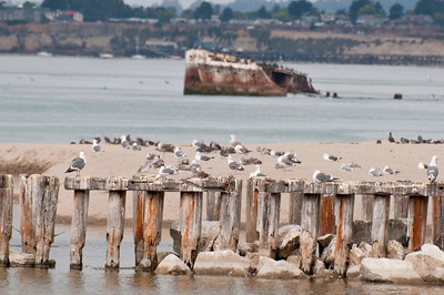 Seagulls resting on old pier foundation.