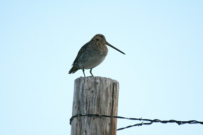 May 2014: Arah's Birding and Portlandia Trip