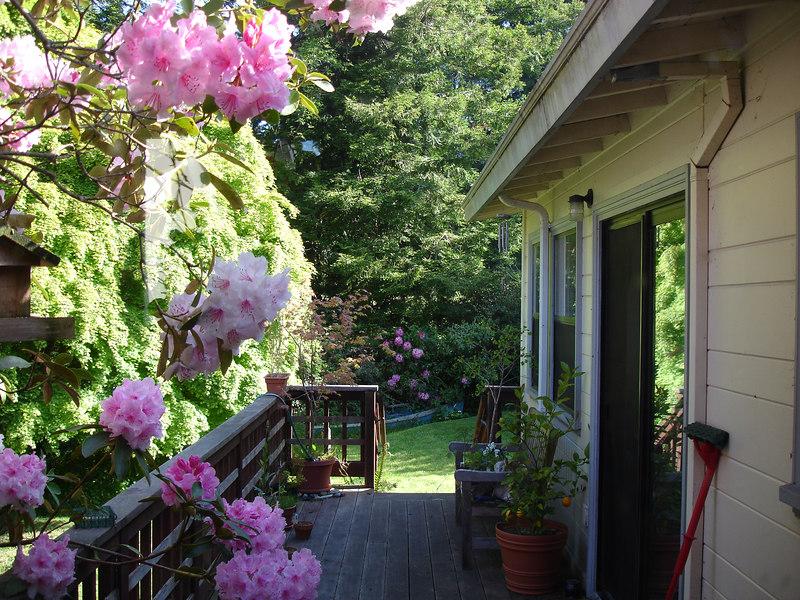 Winslow and Caitlin's backyard deck. Arcata, California