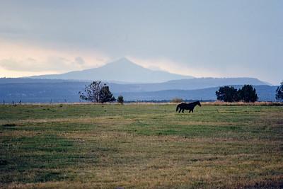 horse+mountain-t0259