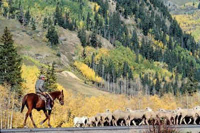 cowboy+sheep-t0241