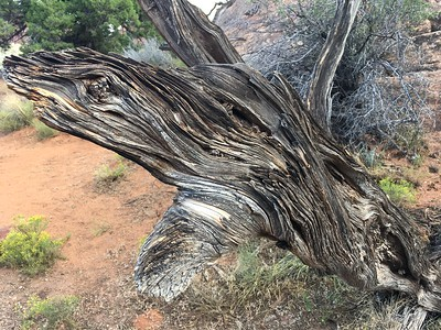 Amazing wood grain