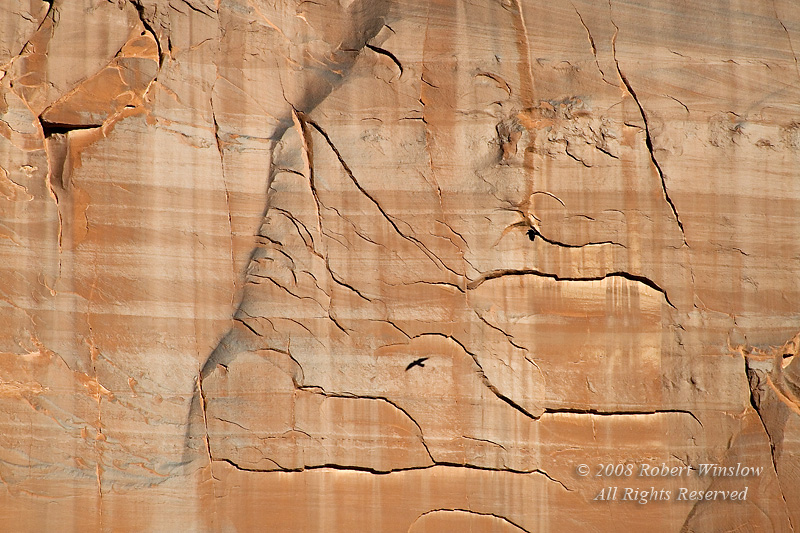 Raven and Shadow across Canyon Wall, Arches National Park, Utah, USA, North America