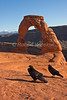 Two Ravens at Delicate Arch 0746W8WM
