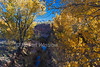 Autumn, Cottonwood Trees, Courthouse Wash, Arches National Park, Utah, La Sal Mountains in the distance, USA, North America