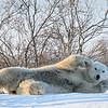 Polar Pinup Girl