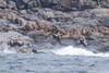 Walrus Island. I wonder how it got its name?
