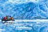 Photographing Kittiwakes at Smeerenburg Glacier, Smeerenburgfjorden.