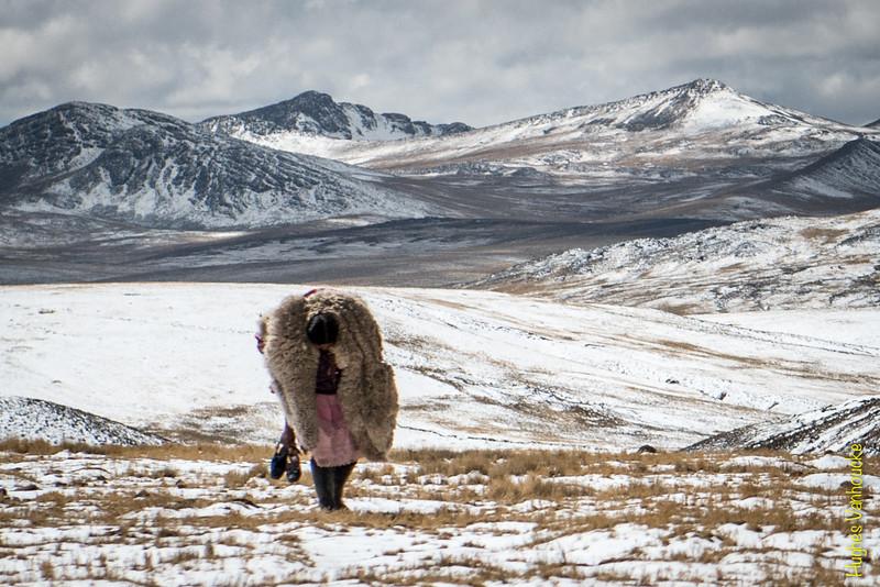 Llevando una alpaca muerta supuestamente del frío - 34E - Arequipa - Perú<br /> <br /> Carrying a dead alpaca due to the snow and severe cold - 34E - Arequipa - Peru<br /> <br /> Landbouwster met een dode alpaca op de schouders, wellicht gestorven van de kou - 34E - Arequipa - Peru<br /> <br /> Paysanne portant un alpaga mort de froid sur les épaules - 34E - Arequipa - Pérou