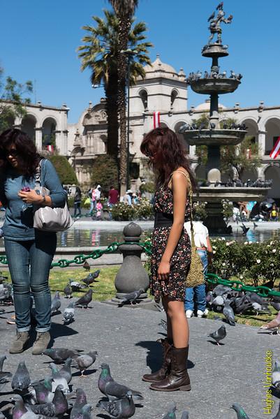 Bonitas palomas - Plaza de Armas - Arequipa - Perú<br /> <br /> Nice pigeons - Plaza de Armas - Arequipa - Peru<br /> <br /> Mooie duiven - Plaza de Armas - Arequipa - Peru<br /> <br /> Beaux pigeons - Plaza de Armas - Arequipa - Pérou