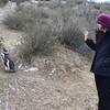 pinguinos!