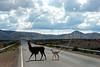 Quebrada de Humahuaca, Jujuy, Argentina, Feb., 2007. ((Austral Foto/Horacio Paone))