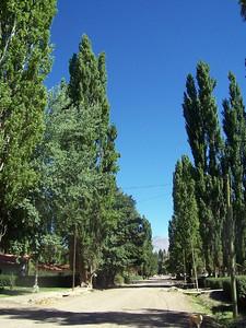 A poplar-lined street in Uspallata.