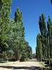 <h3>A poplar-lined street in Uspallata.</h3>