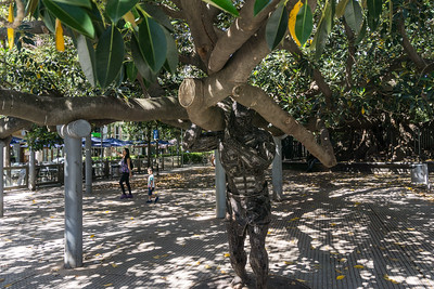 Large tree outside Recoleta Cemetery