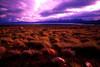 ARG-Lago Viadma, Santa Cruz, Patagonia-2055