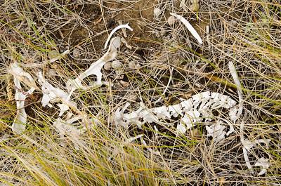 Skeleton of a small animal